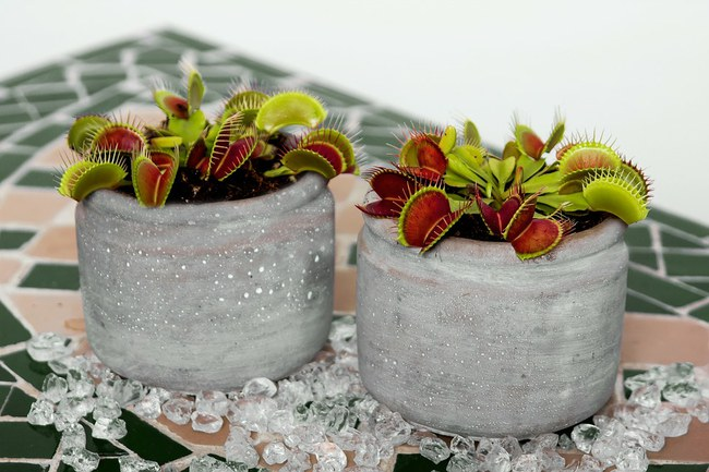 ierīce, kas spēj sazināties ar augiem