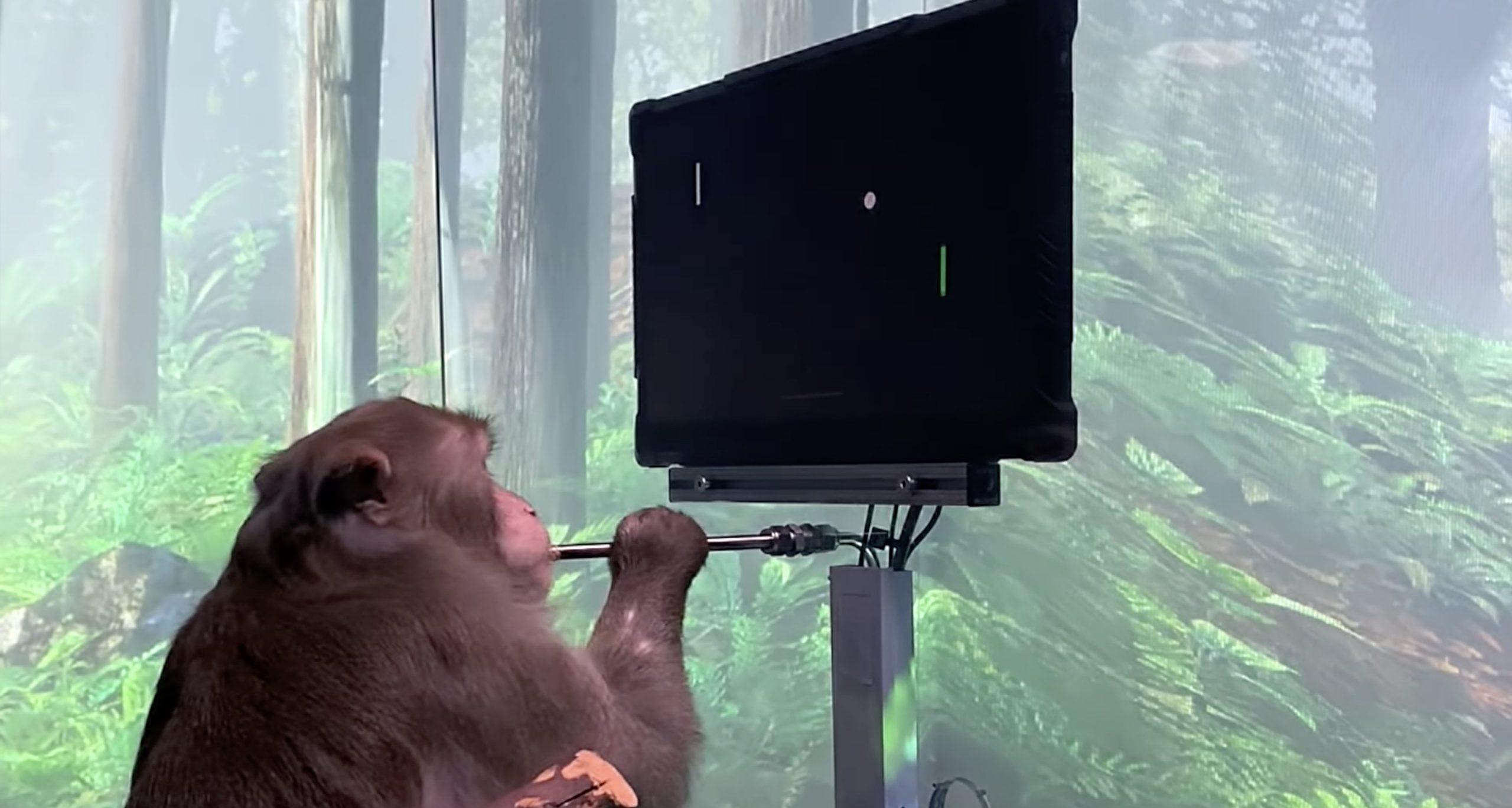 Neuralink pērtiķis spēlē datorspēles